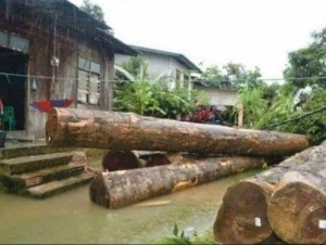 Balak dihanyutkan air deras dalam kejadian banjir luar biasa yang melanda Kelantan akhir Disember lalu